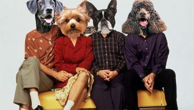 If Popular TV Shows Starred Dogs