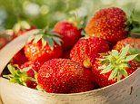 Strawberries may prevent age-related mental decline