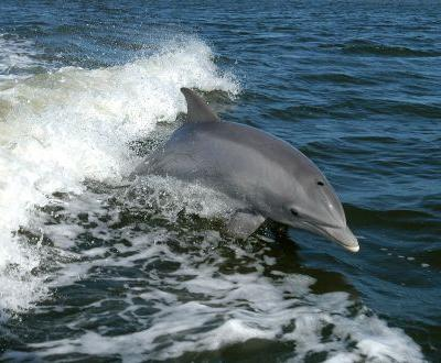 Whales and dolphins engage in social talk just like humans, and much more