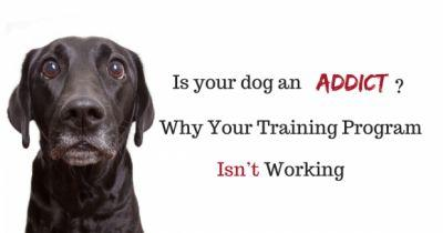 Is Your Dog an Addict? Why Your Training Program Isn't Working