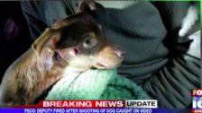 Arkansas Sheriff's Deputy Fired After Shooting Yapping Chihuahua