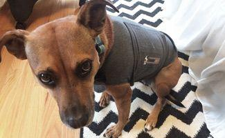 Thunder Jacket for Dogs: Coated in Safety from Thunder and Fireworks