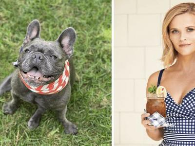 Reese Witherspoon Loses Her Beloved French Bulldog To Cancer