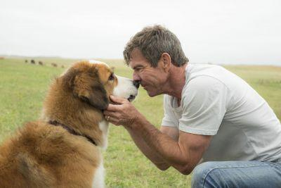 Leaked footage from 'A Dog's Purpose' raises animal cruelty concerns