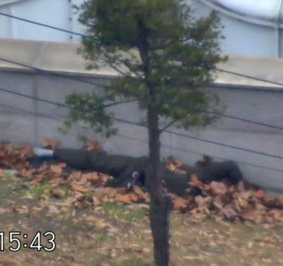 Dramatic video shows North Korean defector's frantic dash to South as former comrades shoot him