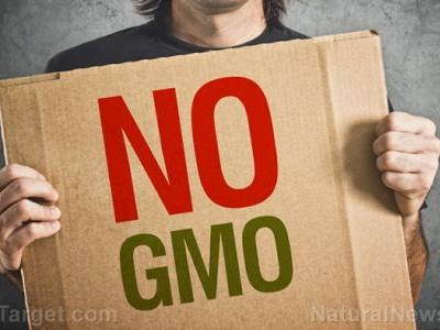 Reverse 28 health conditions when you cut out GMOs researchers tracked the health benefits