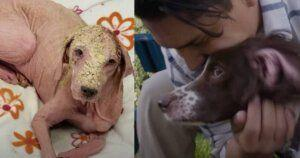 Formerly Hairless Dog Reunites With Her Amazed Rescuer