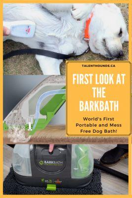 How to make your dog's bath time better
