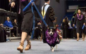 College Grad Receives Diploma Alongside Service Dog Who Made It All Possible