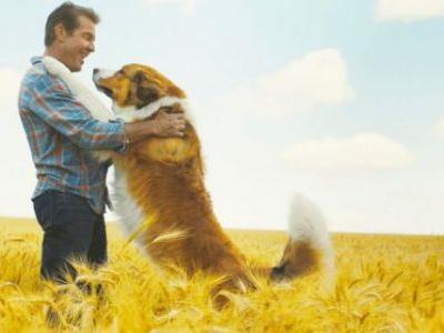 'A Dog's Journey' Review: It Sure is Ruff to Sit Through This Tearjerker