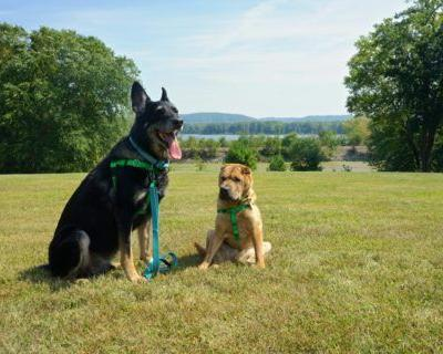 Iowa's Top Pet Friendly Attraction: Effigy Mounds National Monument