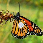 Butterflies are a Free Post