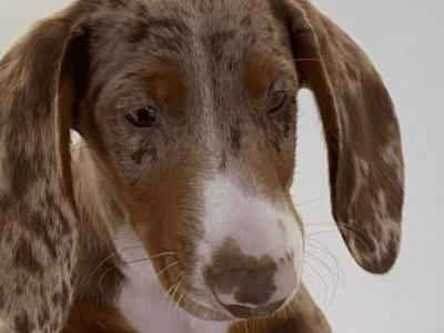 French Designer Jacquemus Gets An Adorable New Puppy
