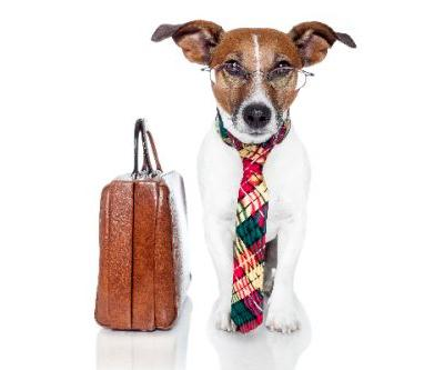 Does Your Company Celebrate Take Your Dog to Work Day?