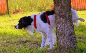 What You Need To Know About Kidney Stones In Dogs