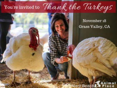 Join us at our annual Thank the Turkeys celebration on