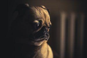 8 Ways To Help Your Dog Deal With The Grief Of Losing A Family Pet