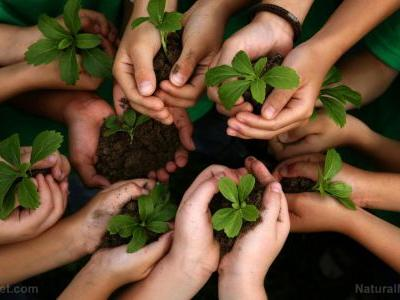 Plant physiologist: Use plants to reduce indoor pollution and save energy