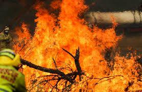 The Federal Government announced support packages to help bushfire impacted areas