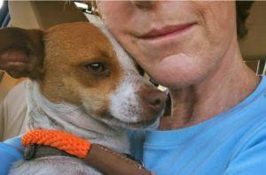 Dog Saved From Traffic Now Gives Hugs To Everyone She Meets