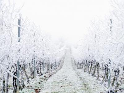 How Texas's Historic Weather Will Affect Its Wine
