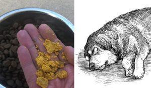 Older Dog Getting Stiff? This Golden Spice Can Get Them Moving Again