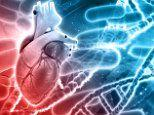 Heart protecting gene found in Greek villagers