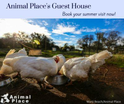 Animal Place's Guest House: a new way to experience the