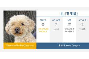 Meet Prince! Your purchases have sponsored his shelter kennel!