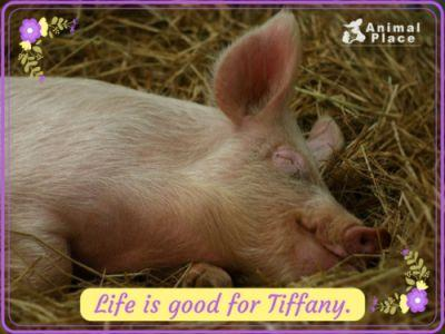 Tiffany was rescued from a research lab where she lived in a