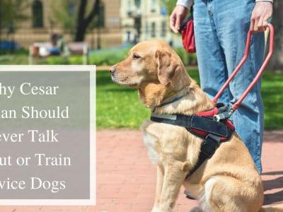 Why Cesar Millan Should Never Talk About or Train Service Dogs