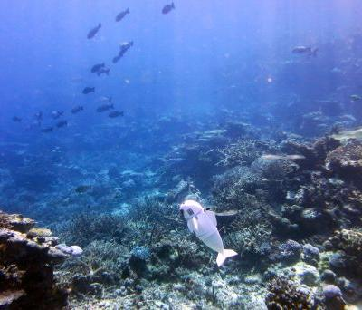 Researchers create robotic fish that can swim underwater on its own