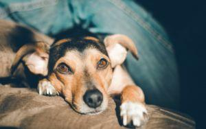 5 Signs Your Dog Is Jealous And How To Deal With It