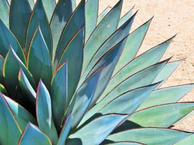 Agave Nectar: Healthy 'Natural' Sweetener or All Hype?