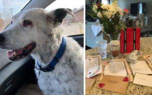 Baristas Shower Customer With Heartfelt Letters & Gifts After Dog's Death