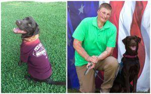 Service Dog Chooses A Wounded Veteran To Devote His Life To