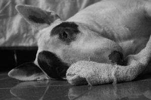 What Is Kidney Cancer In Dogs?