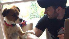 Chris Evans Plays Real-Life Hero With the Best Possible Sidekick: His Rescue Dog