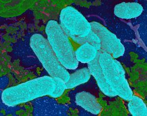 New Resource for Microbiologists: Collection of 3,000 Bacteria Genomes Released