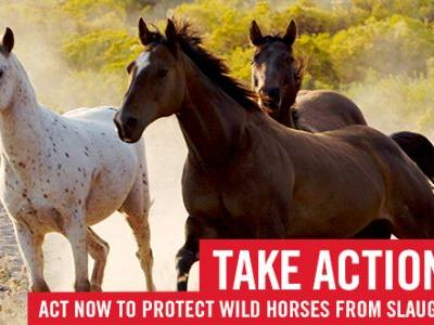 Take Action: Protect Louisiana's Wild Horses