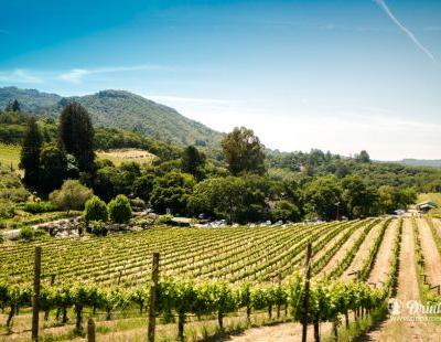 Summertime Fun in Sonoma County