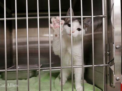 KITTEN Act Introduced to End the USDA's Deadly Testing on Kittens