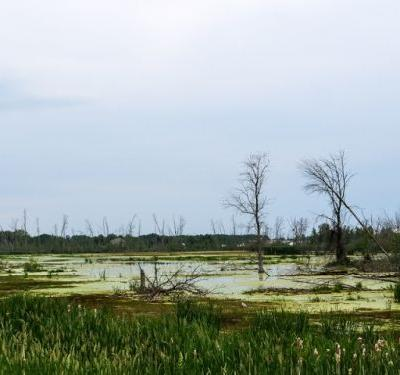 A MARSHY RE-VISIT