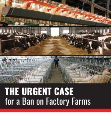 Weekend reading: ban factory farms
