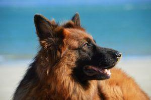 10 Simple Things That Could Add Years To Your Dog's Life