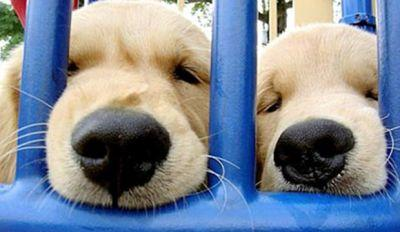 10 Puppies So Cute You Won't Be Able To Handle It