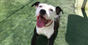 Sweet Shelter Dog Who Charms Humans Is STILL Looking For Her Forever Home