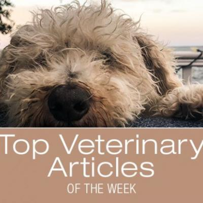 Top Veterinary Articles of the Week: Gastroenteritis, When to Bring Your Dog to the ER, and more