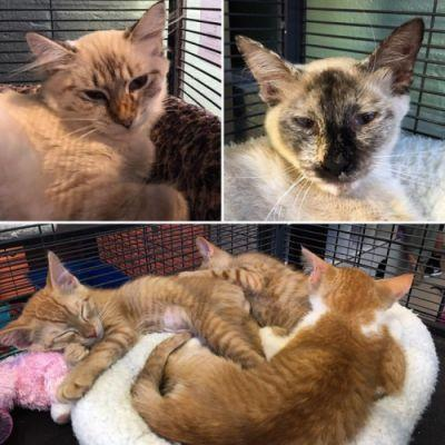 Today was a big day for this family! The top two kitties are