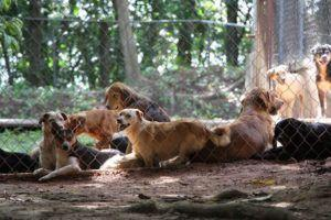 Rescue Organization Builds Shelter For Strays In Puerto Rico, Thanks To You